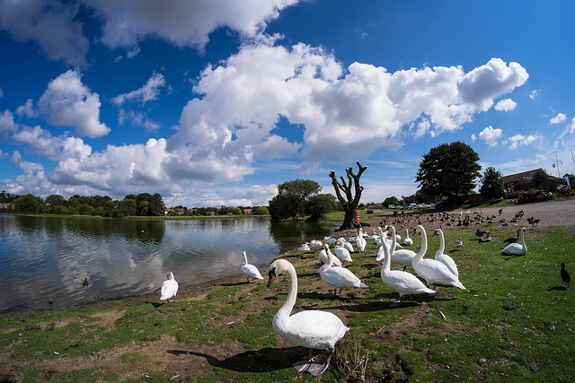 With the birds on Hornsea Mere