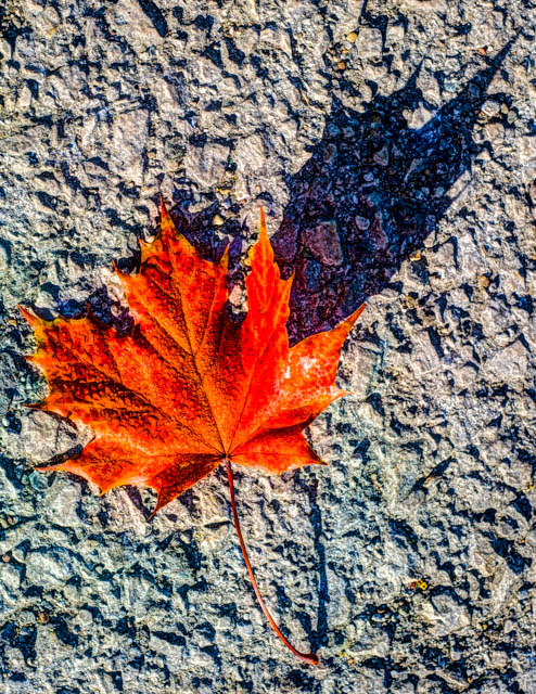 On the way out of the carpark I found this leaf on the ground.