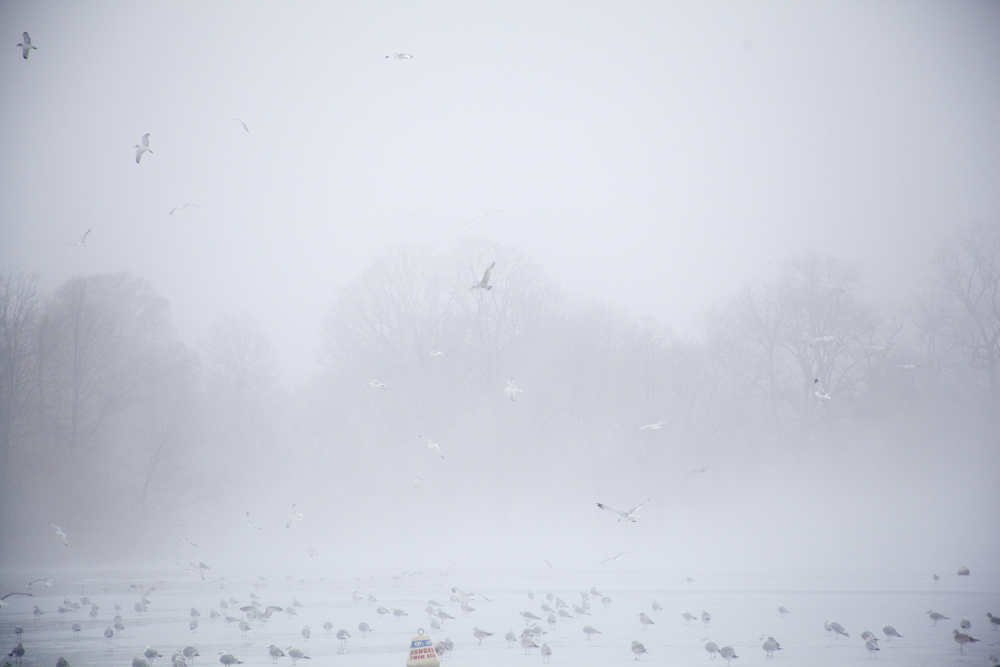 fogcity-9.jpg