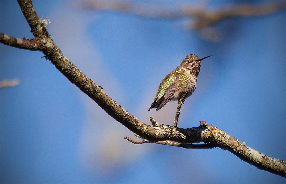 WebHummingbird-9750.jpg