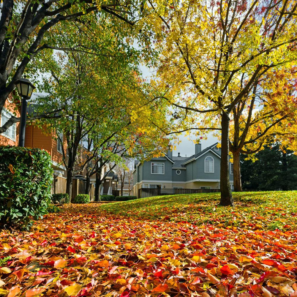 Fall colors in my neighborhood
