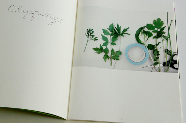 journalof plants - maria.jpg