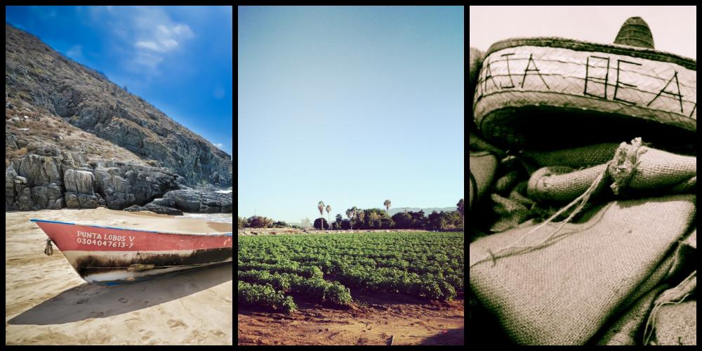1/ Punta Lobos  |  2/Fields of basil  | 3/Baja Beans Roasting Company