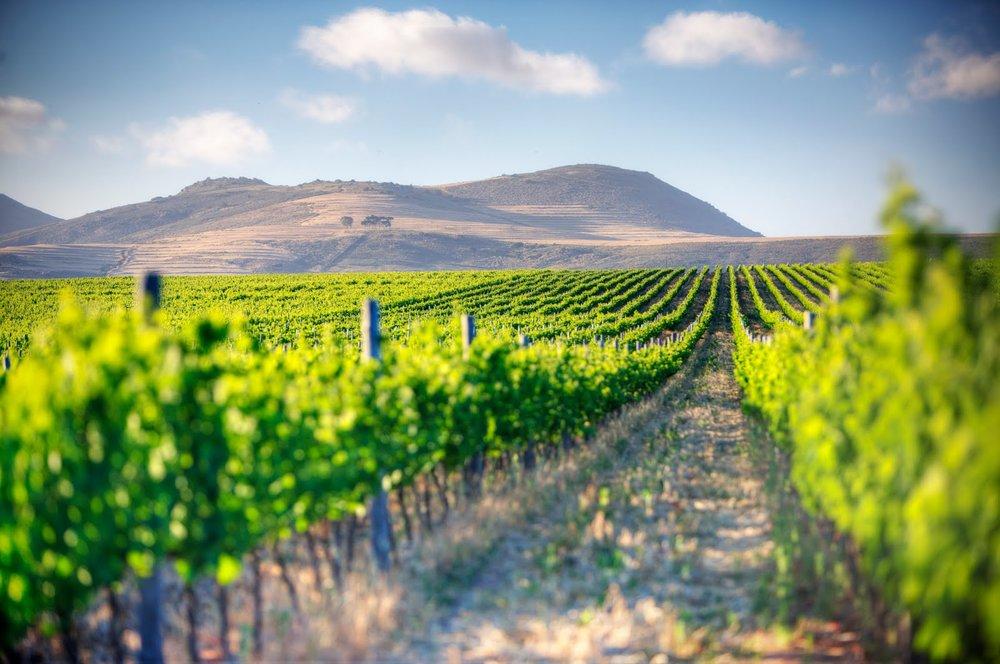Cape-Town-wine-estat.jpg