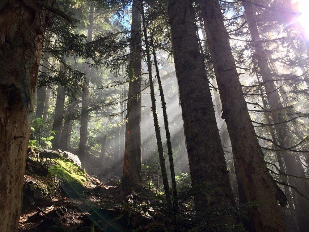 forest-1714242_1920.jpg