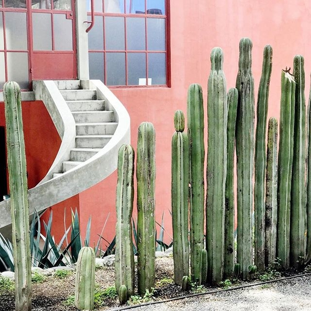 MEXICO CITY,MEXICO - THE ARCHITECTURE, FRIDA + DIEGO, GUIDED FOOD TOURS + MORE   AUGUST 22 - 27