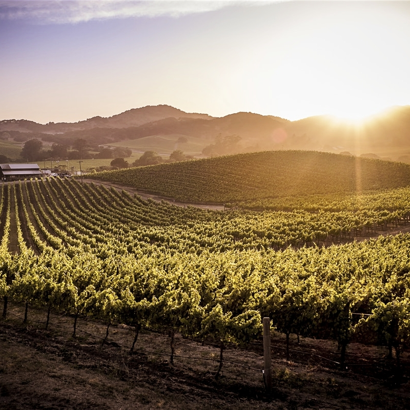 sonoma, california - A CULINARY MASTERCLASS IN WINE COUNTRY