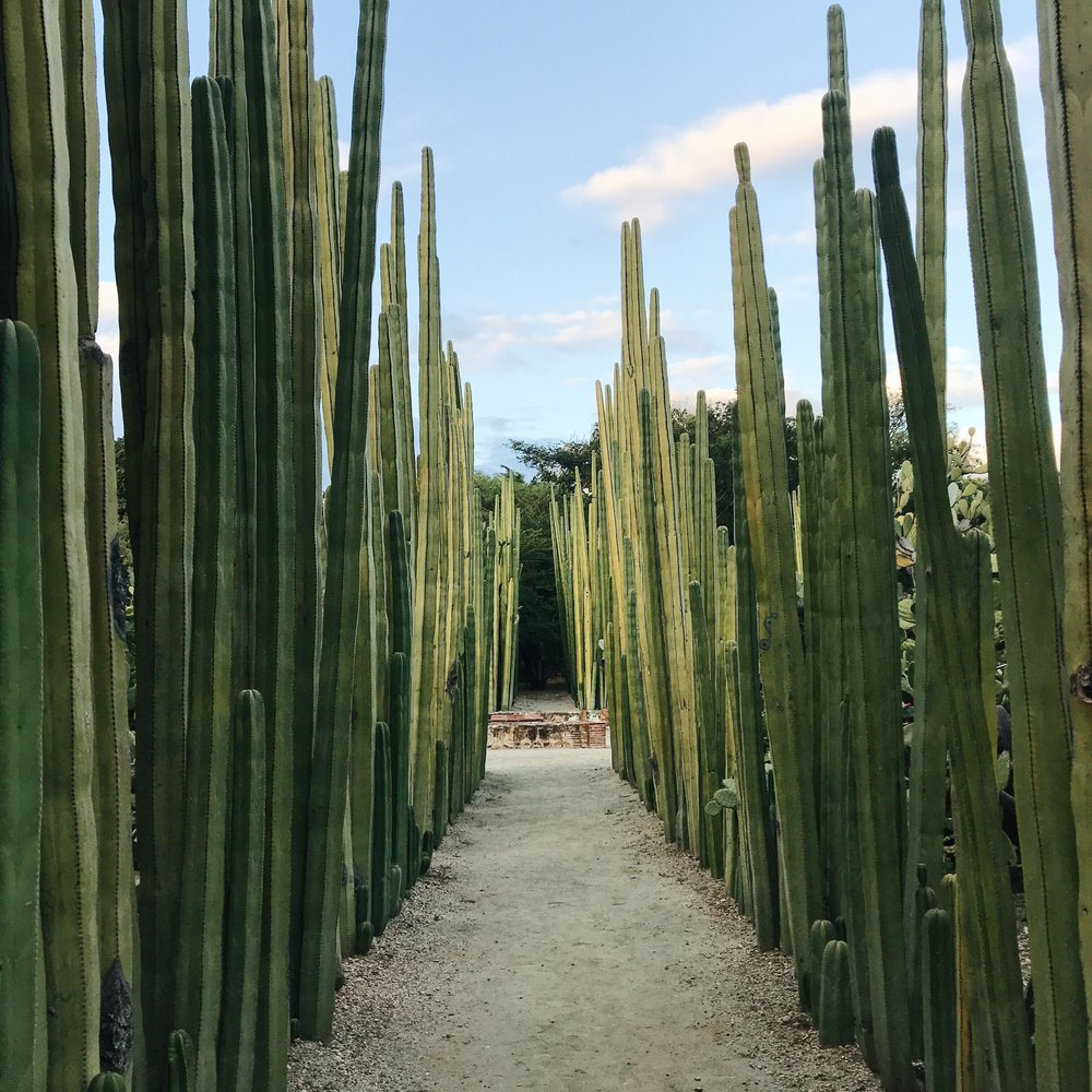 OAXACA CITY, MEXICO - Natural Dyeing, Weaving, Cooking and Culinary, Markets, Shopping + more!