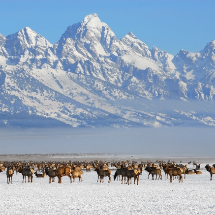 JACKSON HOLE, WYOMING - Learn how to