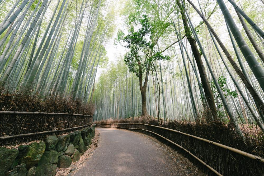 pketron arashiyama 3