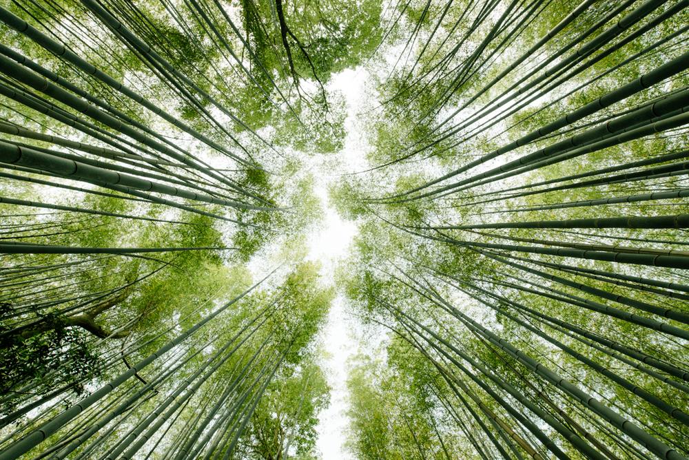 pketron arashiyama 8