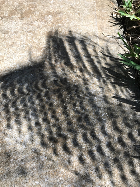 Lots of little crescent Suns!