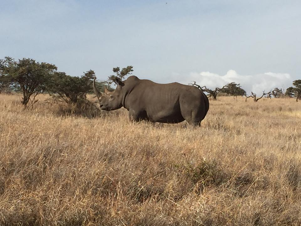 One of our runners had this unexpected great view of a Rhino while he ran the Marathon - he was protected by the wonderful staff at Lewa