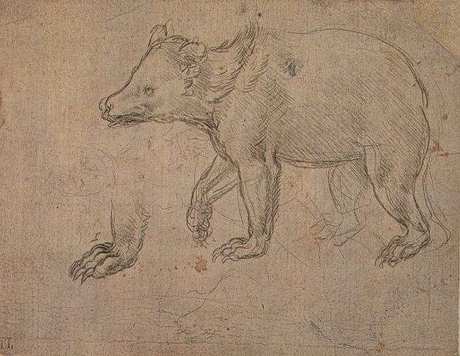 Drawing of a bear by Leonardo da Vinci [Metropolitan Museum]