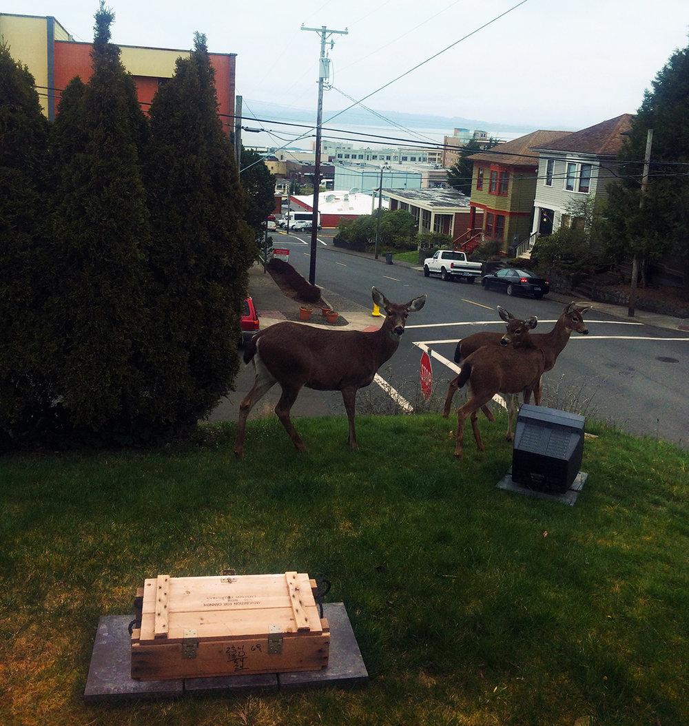 deer7.jpg