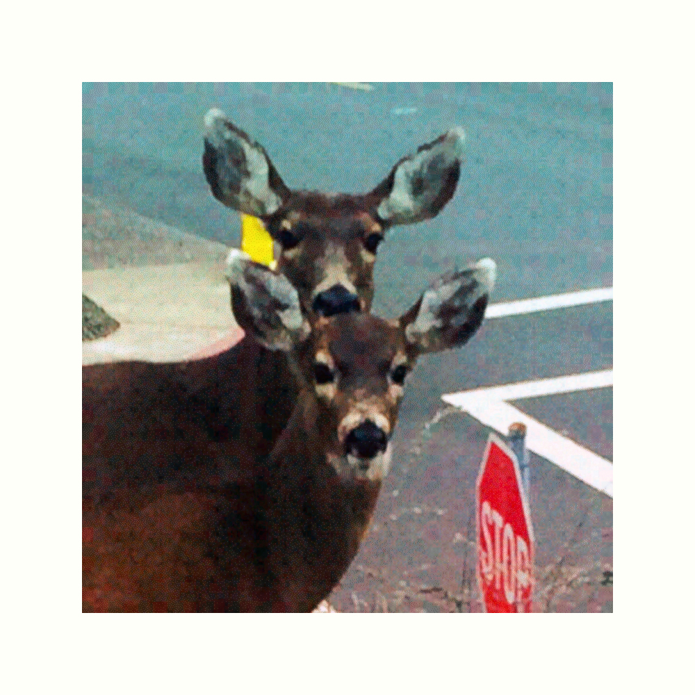 """Title: """"2 Deer with Facial Recognition Masks"""" Medium: Digitally enhanced smart phone photo Dimensions: 1000 x 1000 pixels Date: 2019"""