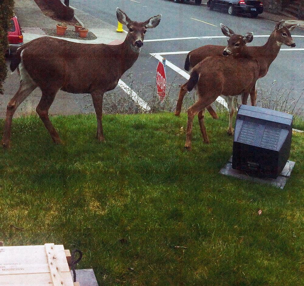 """[3] Deer in the Front Yard Sculpture Park"""
