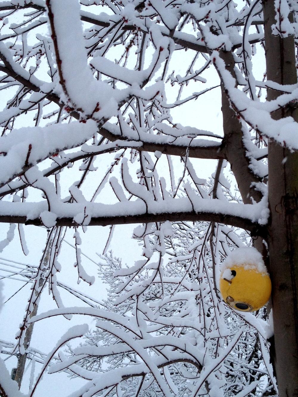 Poor birdies.
