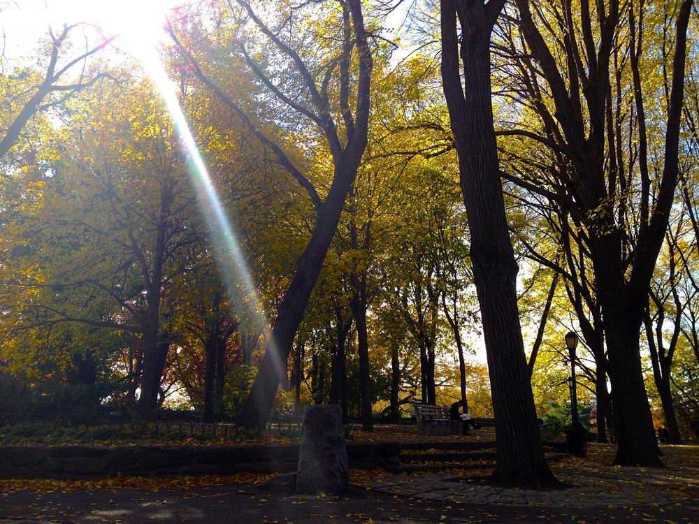 Merveille de l'automne, Fort Tryon Park