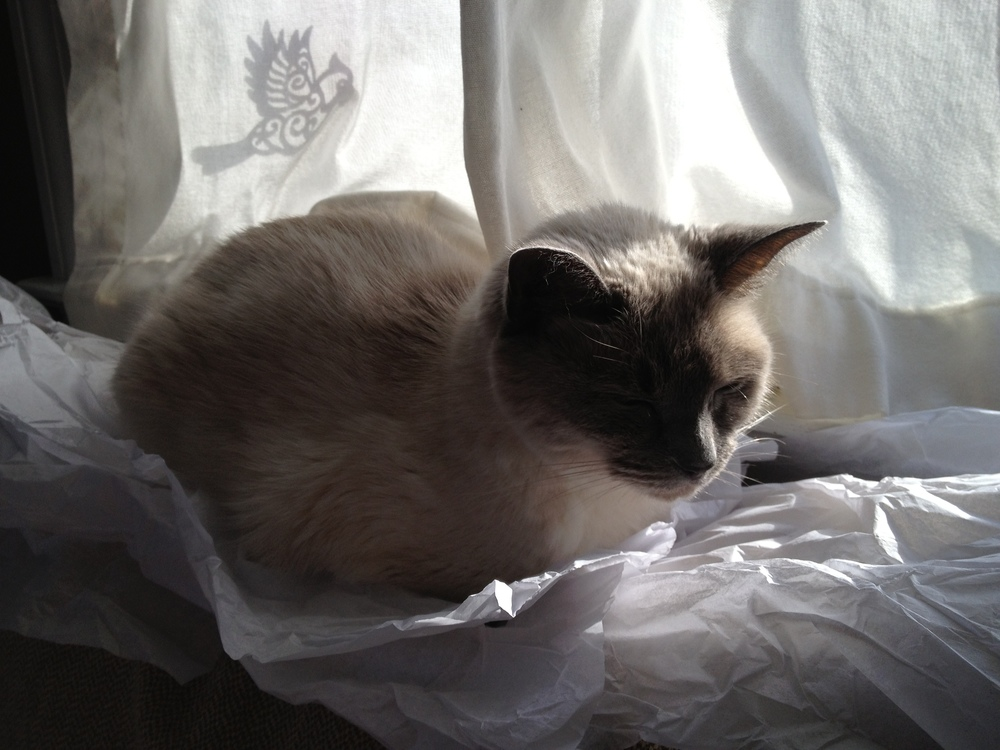 Tissue Paper = Cat Velcro.