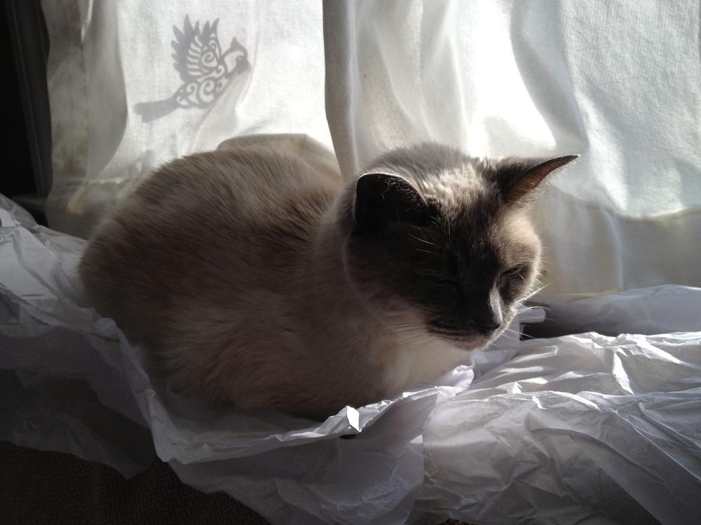 Tissue Paper = Cat Velcro.