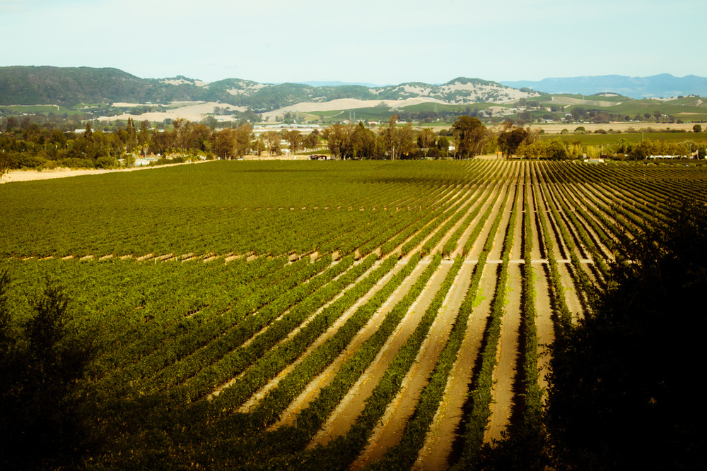 Sonoma Valley, by Daveography.ca