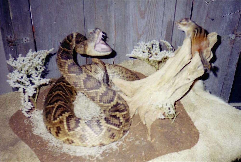 snakes_2.JPG