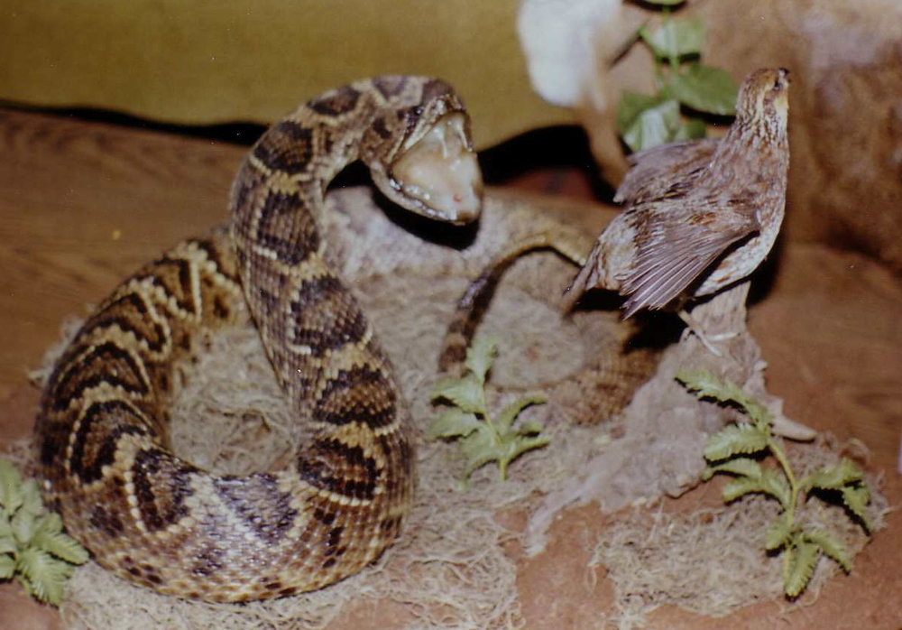 reptiles_2.JPG