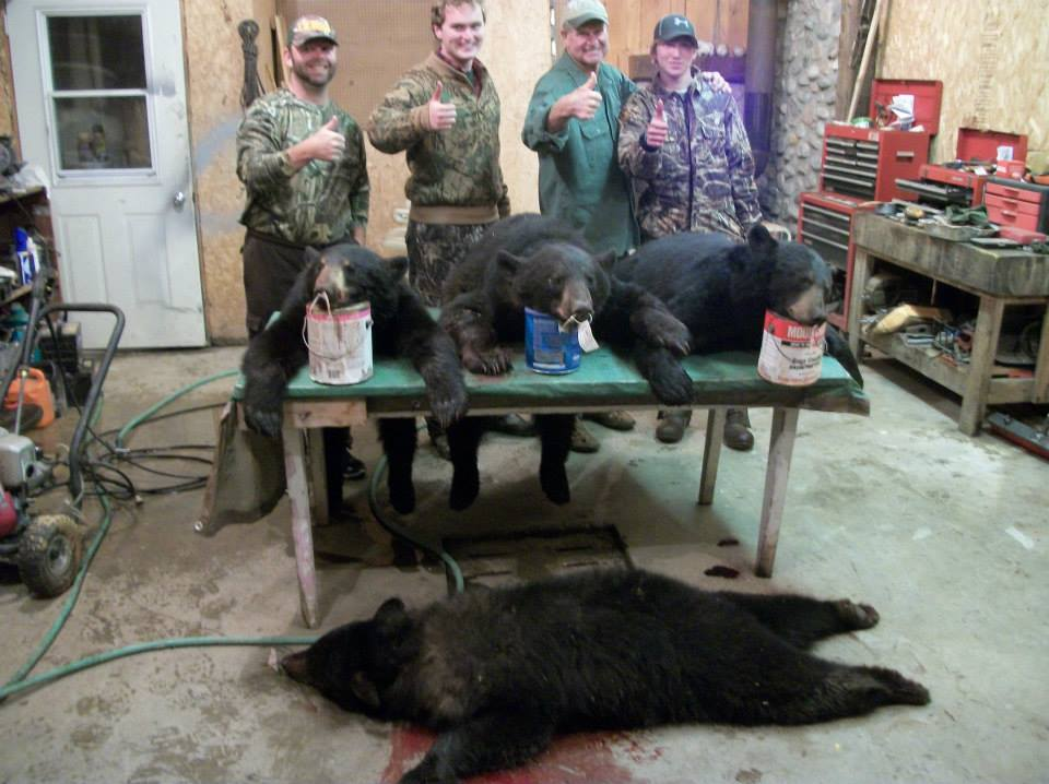 Quebec Bear Hunt Hicks Taxidermy
