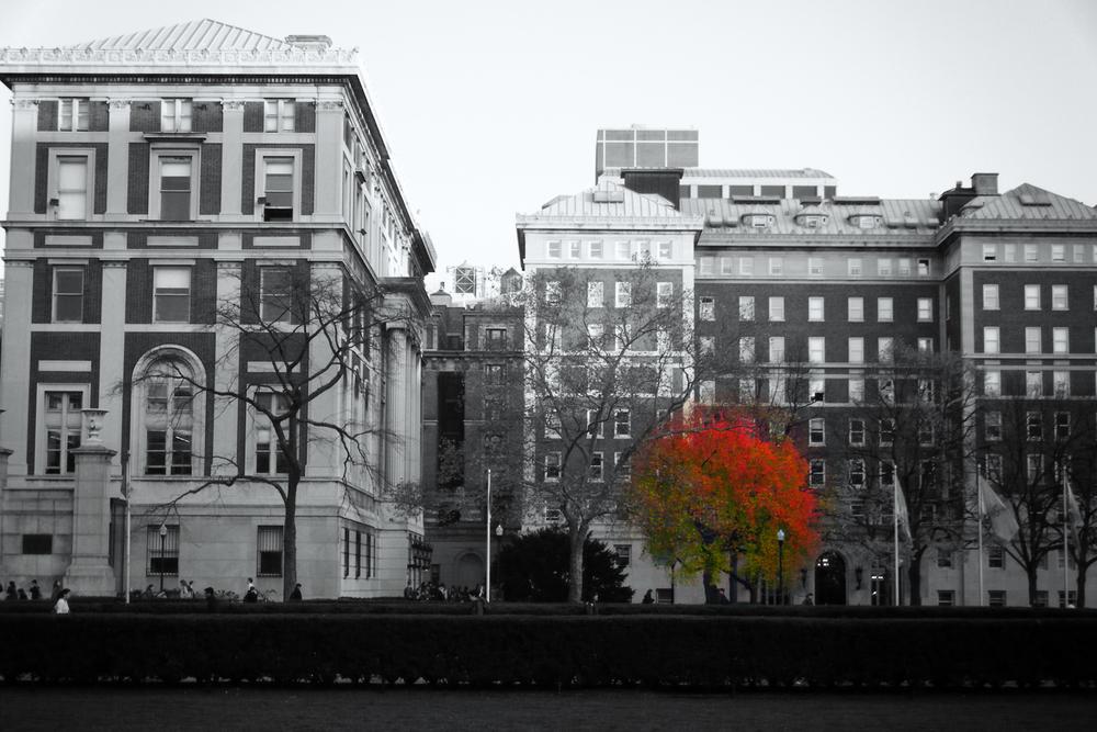 Last Leaves