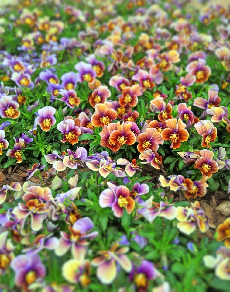 Bentonville flowers