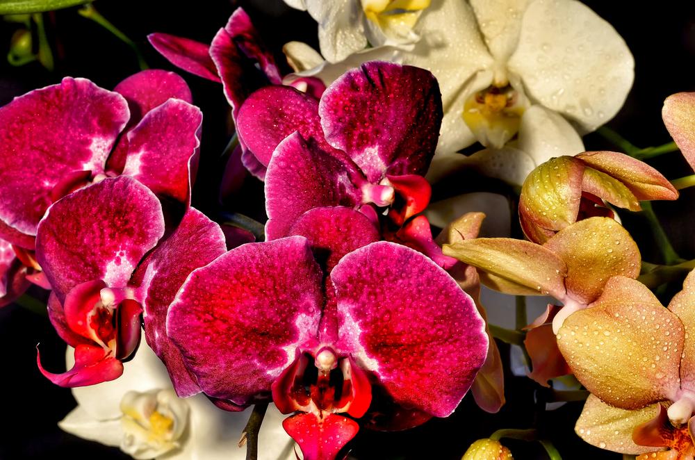 Orchid5.jpg