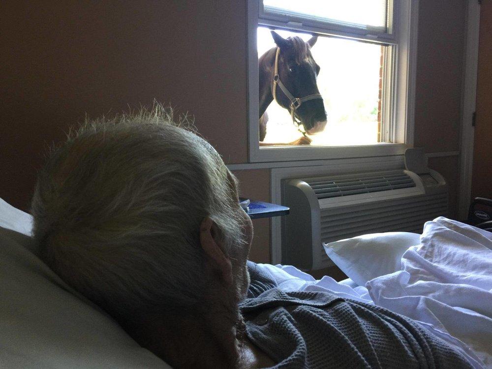 horse in the window.jpg