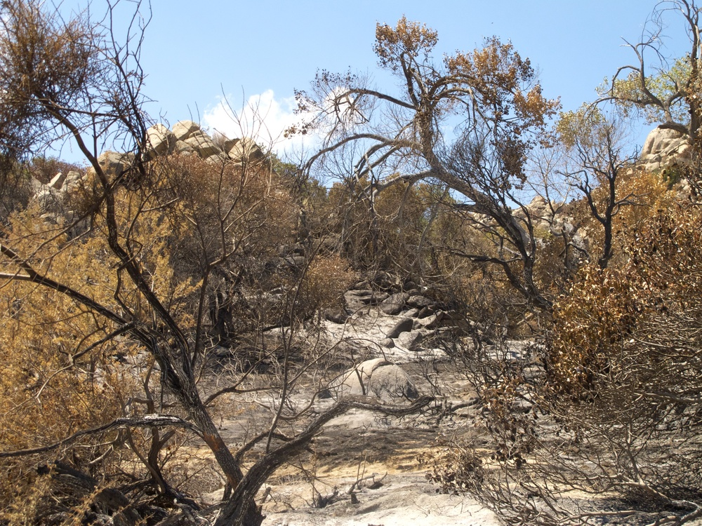 Vallecito_Fire_8.jpg