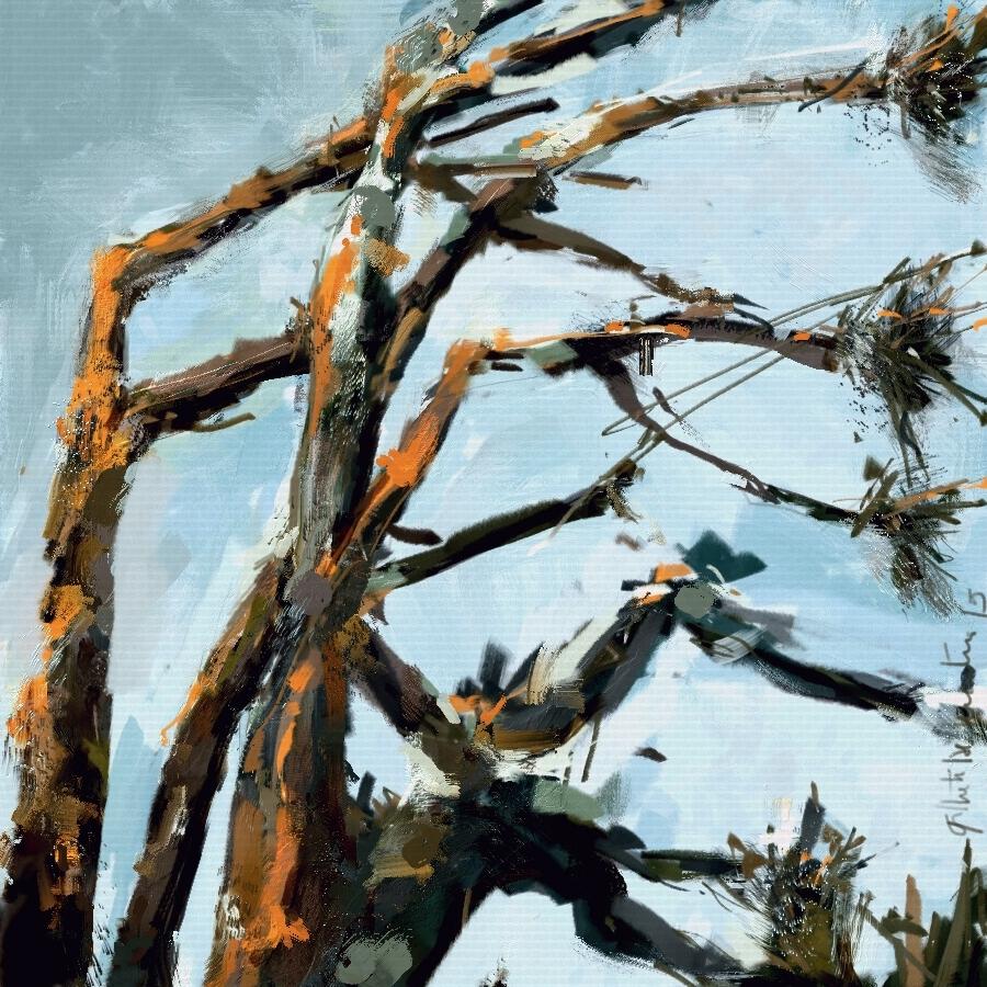 Pine trees in Punta del Este