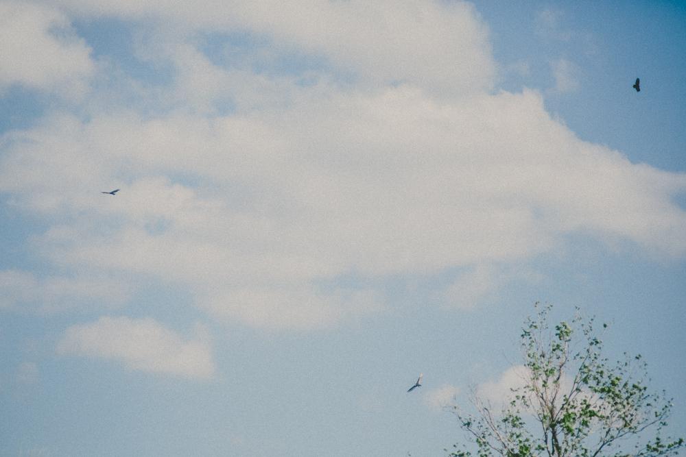 MH5A5427.jpg
