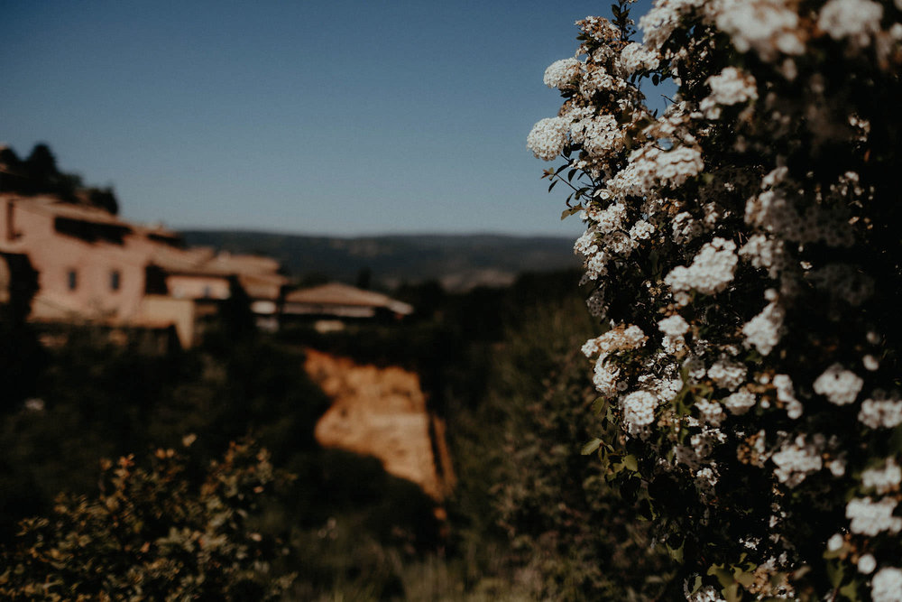 roussillon provence france flower photo