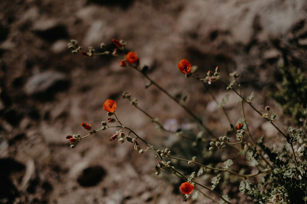 death valley adventure elopement wedding photographer national park desert mountains flowers