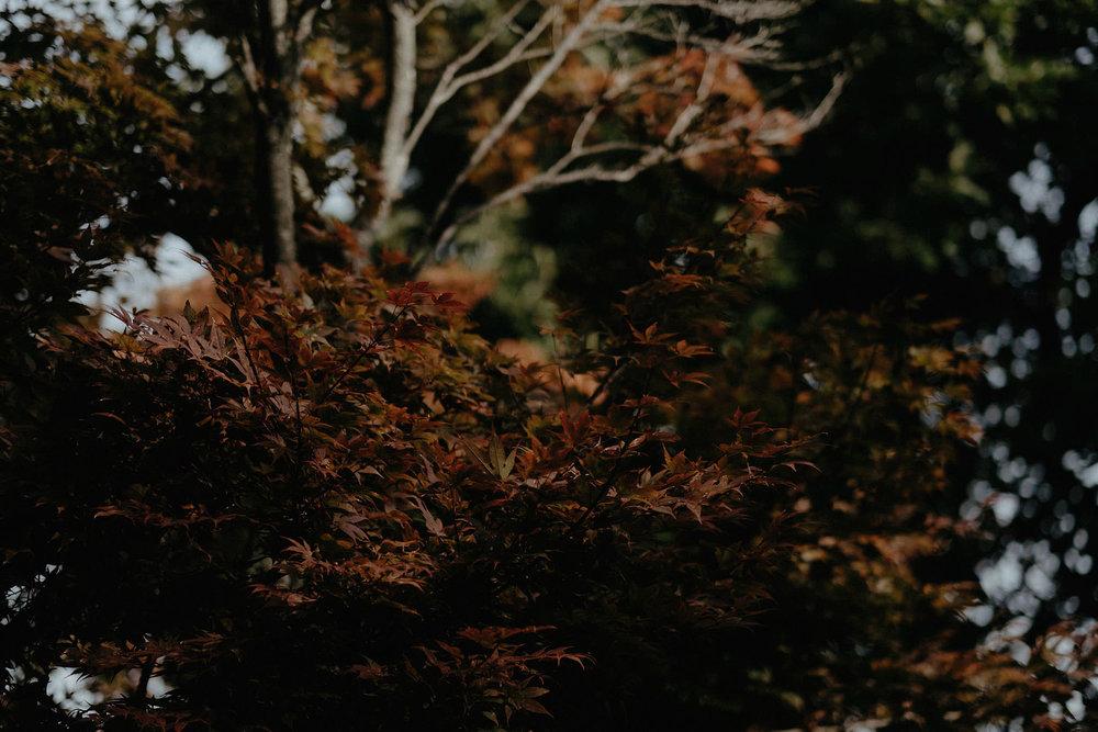 andover new jersey crossed keys estate adventure wedding photographer trees leaves autumn