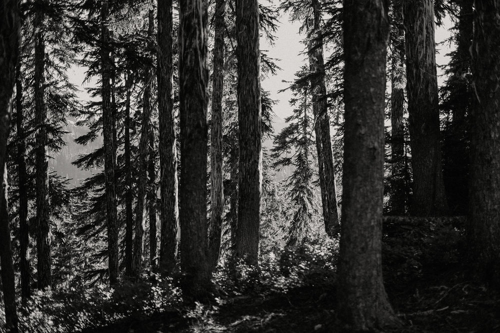 black and white cascade mountains forest trees photo