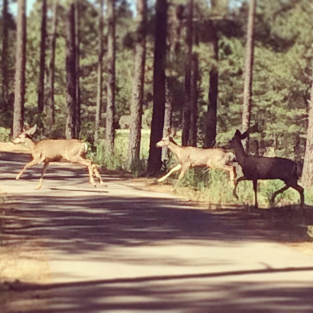 Deer running past Carrizo walking path.