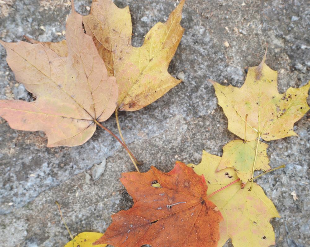 Oct 18_2013 09.jpg