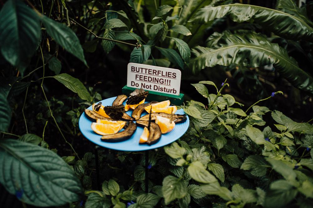 niagara falls butterflies