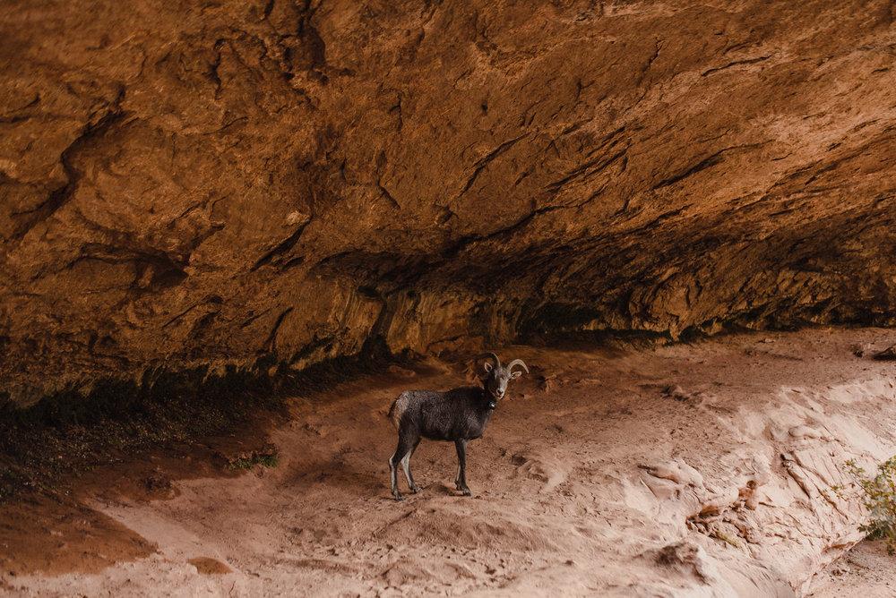 zion mountain goats