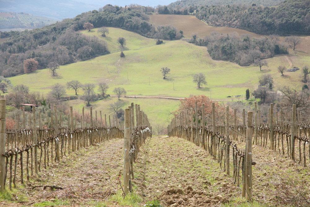 Gianni Brunelli Winery, Montalcino, Tuscany