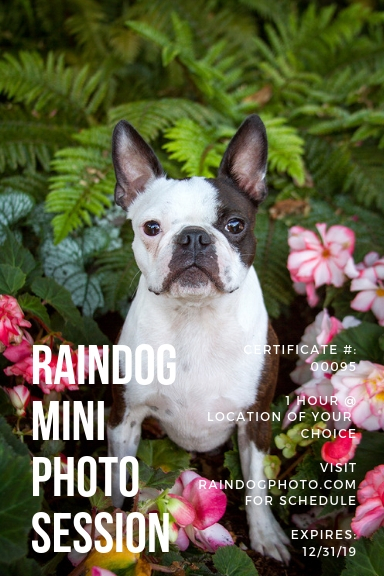 Copy of Raindog Session Certificate 1.jpg