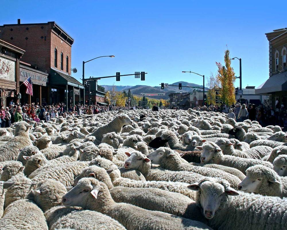 The Trailing of the Sheep Festival - Sun Valley Idaho