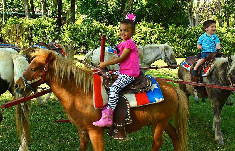 5 Pony Carousel