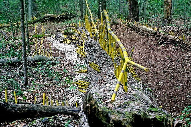 Haliburton Forest Project, Haliburton, Ontario, Canada. Installation conceived as homage to dead trees. Curator: Reinhard Reitzenstein.