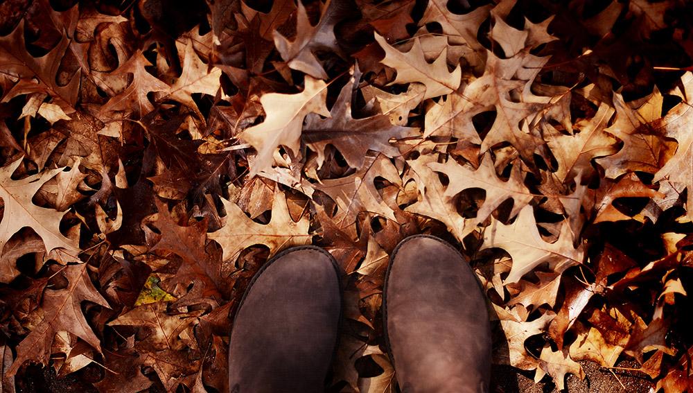 fallleaves.jpg